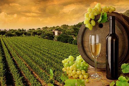 欧洲葡萄酒.jpg